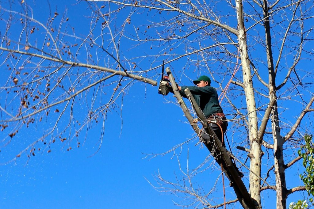 Contact Us-Hollywood FL Tree Trimming and Stump Grinding Services-We Offer Tree Trimming Services, Tree Removal, Tree Pruning, Tree Cutting, Residential and Commercial Tree Trimming Services, Storm Damage, Emergency Tree Removal, Land Clearing, Tree Companies, Tree Care Service, Stump Grinding, and we're the Best Tree Trimming Company Near You Guaranteed!