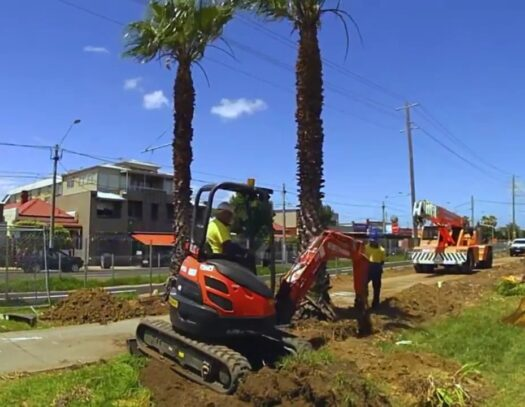 Palm Tree Removal-Hollywood FL Tree Trimming and Stump Grinding Services-We Offer Tree Trimming Services, Tree Removal, Tree Pruning, Tree Cutting, Residential and Commercial Tree Trimming Services, Storm Damage, Emergency Tree Removal, Land Clearing, Tree Companies, Tree Care Service, Stump Grinding, and we're the Best Tree Trimming Company Near You Guaranteed!