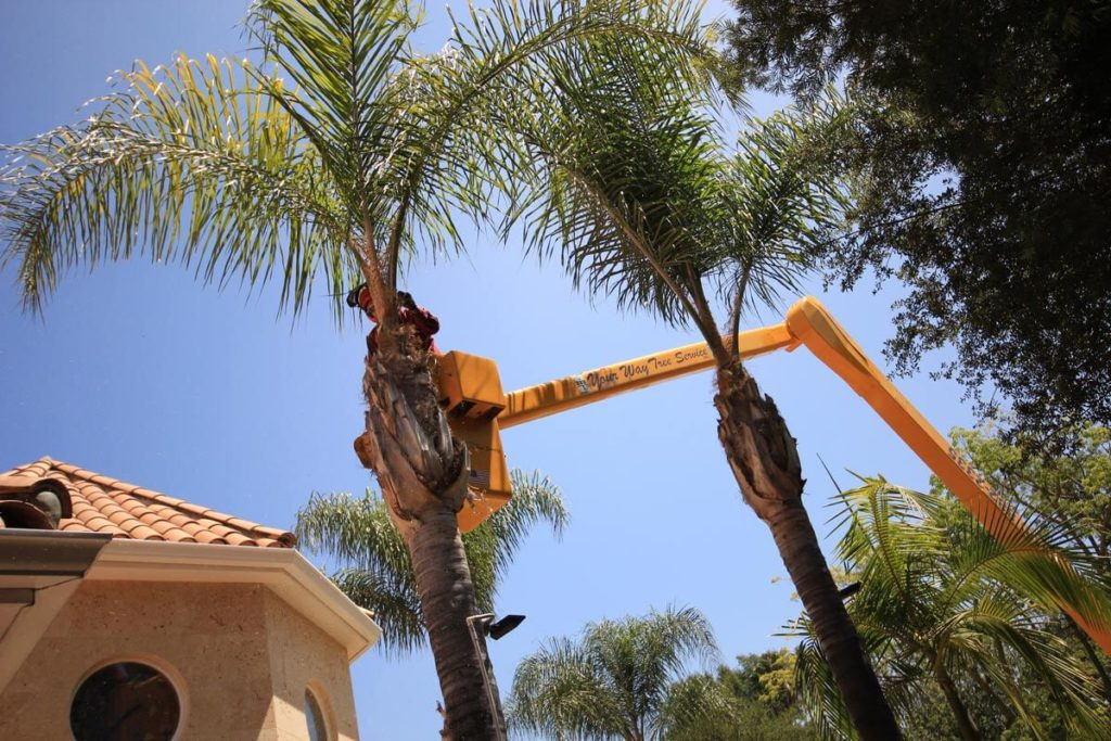 Palm Tree Trimming-Hollywood FL Tree Trimming and Stump Grinding Services-We Offer Tree Trimming Services, Tree Removal, Tree Pruning, Tree Cutting, Residential and Commercial Tree Trimming Services, Storm Damage, Emergency Tree Removal, Land Clearing, Tree Companies, Tree Care Service, Stump Grinding, and we're the Best Tree Trimming Company Near You Guaranteed!