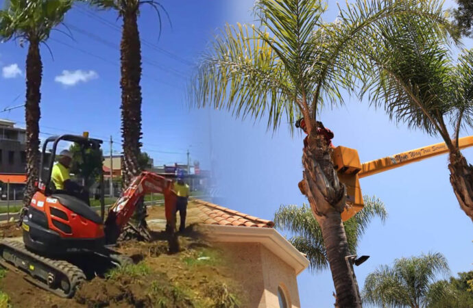 Palm tree trimming & palm tree removal-Hollywood FL Tree Trimming and Stump Grinding Services-We Offer Tree Trimming Services, Tree Removal, Tree Pruning, Tree Cutting, Residential and Commercial Tree Trimming Services, Storm Damage, Emergency Tree Removal, Land Clearing, Tree Companies, Tree Care Service, Stump Grinding, and we're the Best Tree Trimming Company Near You Guaranteed!