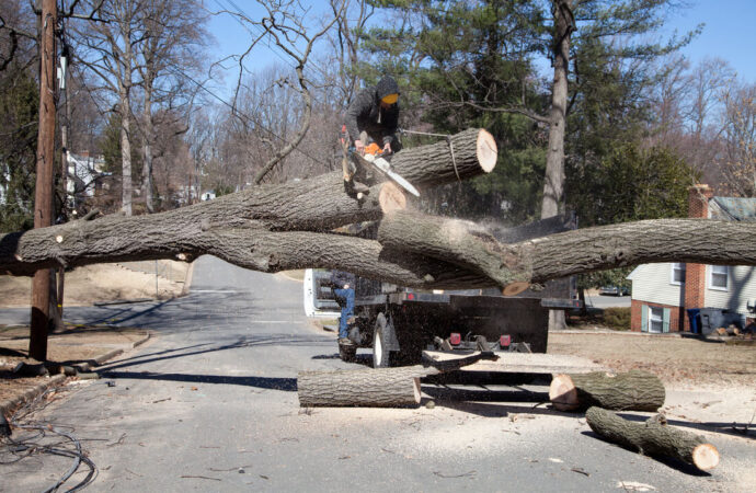 Residential Tree Services-Hollywood FL Tree Trimming and Stump Grinding Services-We Offer Tree Trimming Services, Tree Removal, Tree Pruning, Tree Cutting, Residential and Commercial Tree Trimming Services, Storm Damage, Emergency Tree Removal, Land Clearing, Tree Companies, Tree Care Service, Stump Grinding, and we're the Best Tree Trimming Company Near You Guaranteed!