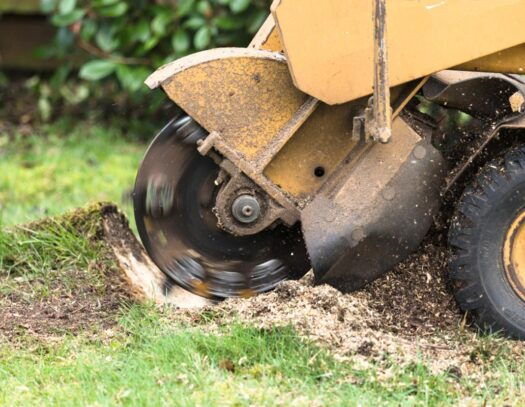 Stump Grinding-Hollywood FL Tree Trimming and Stump Grinding Services-We Offer Tree Trimming Services, Tree Removal, Tree Pruning, Tree Cutting, Residential and Commercial Tree Trimming Services, Storm Damage, Emergency Tree Removal, Land Clearing, Tree Companies, Tree Care Service, Stump Grinding, and we're the Best Tree Trimming Company Near You Guaranteed!