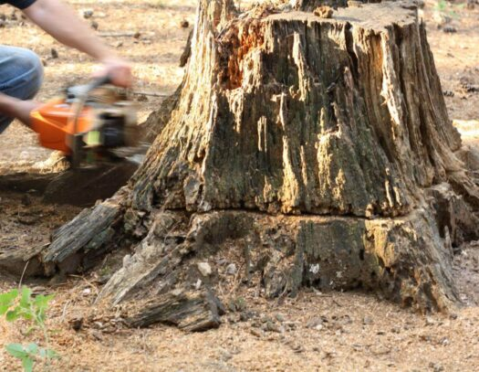 Stump Removal-Hollywood FL Tree Trimming and Stump Grinding Services-We Offer Tree Trimming Services, Tree Removal, Tree Pruning, Tree Cutting, Residential and Commercial Tree Trimming Services, Storm Damage, Emergency Tree Removal, Land Clearing, Tree Companies, Tree Care Service, Stump Grinding, and we're the Best Tree Trimming Company Near You Guaranteed!
