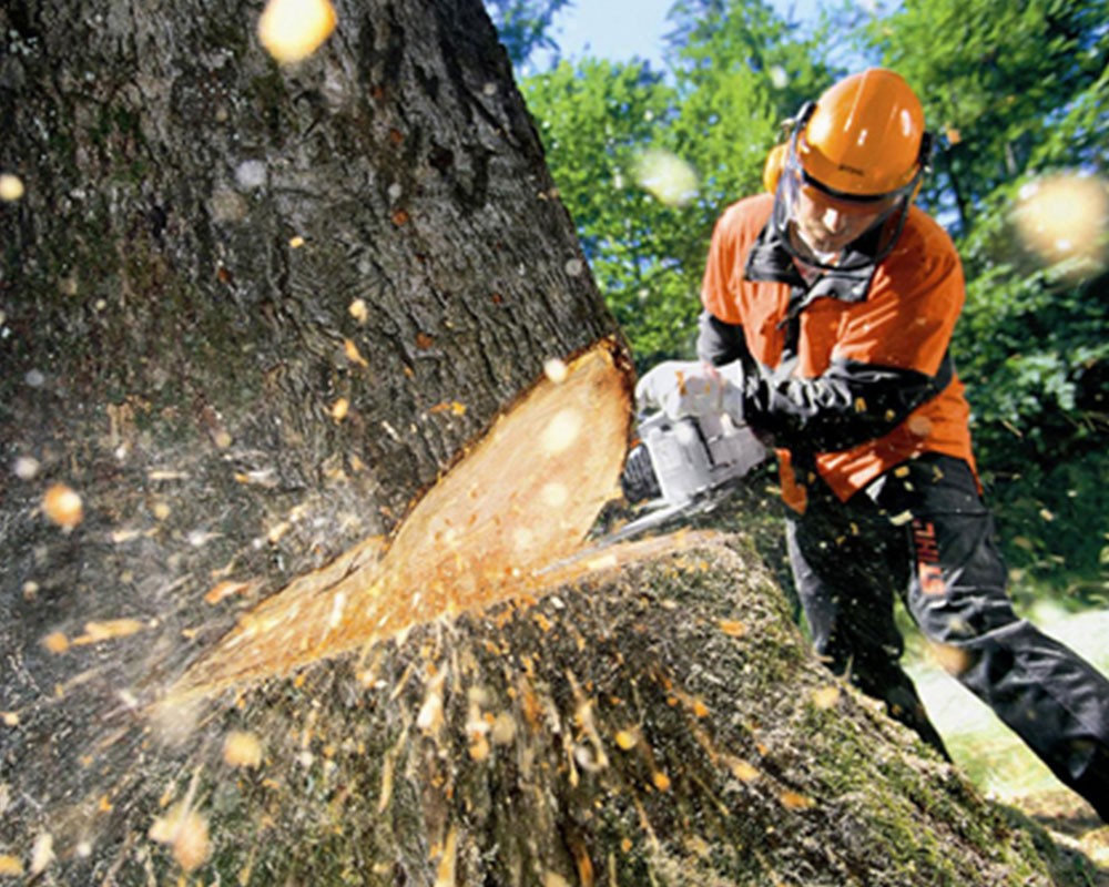 Tree Cutting-Hollywood FL Tree Trimming and Stump Grinding Services-We Offer Tree Trimming Services, Tree Removal, Tree Pruning, Tree Cutting, Residential and Commercial Tree Trimming Services, Storm Damage, Emergency Tree Removal, Land Clearing, Tree Companies, Tree Care Service, Stump Grinding, and we're the Best Tree Trimming Company Near You Guaranteed!