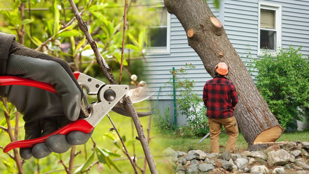 Tree pruning & tree removal-Hollywood FL Tree Trimming and Stump Grinding Services-We Offer Tree Trimming Services, Tree Removal, Tree Pruning, Tree Cutting, Residential and Commercial Tree Trimming Services, Storm Damage, Emergency Tree Removal, Land Clearing, Tree Companies, Tree Care Service, Stump Grinding, and we're the Best Tree Trimming Company Near You Guaranteed!